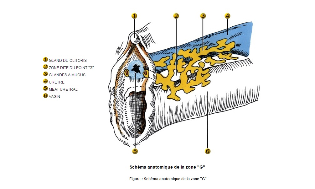 Shéma anatomique de la zone